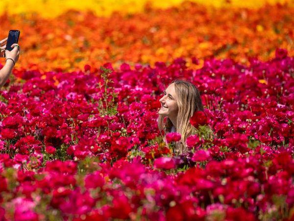 ફૂલોના ખેતરમાં ફૂલની તસવીરઃ પોતાનું સરનામું મકાને જ બદલ્યું; બોટમાં, ઊંટ પર તો સ્નોમોબાઈલથી કોરોનાની રસી પહોંચી રહી છે
