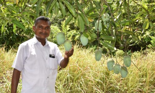 ગાય આધારિત પ્રાકૃતિક ખેતી કરીને 10 વીઘા જમીનમાં 350 મણ કેરીનું માતબર ઉત્પાદન મેળવતા શિક્ષક ભરતભાઈ પટેલ
